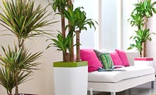 d coration les plantes vertes d int rieur jardin informations. Black Bedroom Furniture Sets. Home Design Ideas